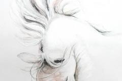 salut du cheval blanc